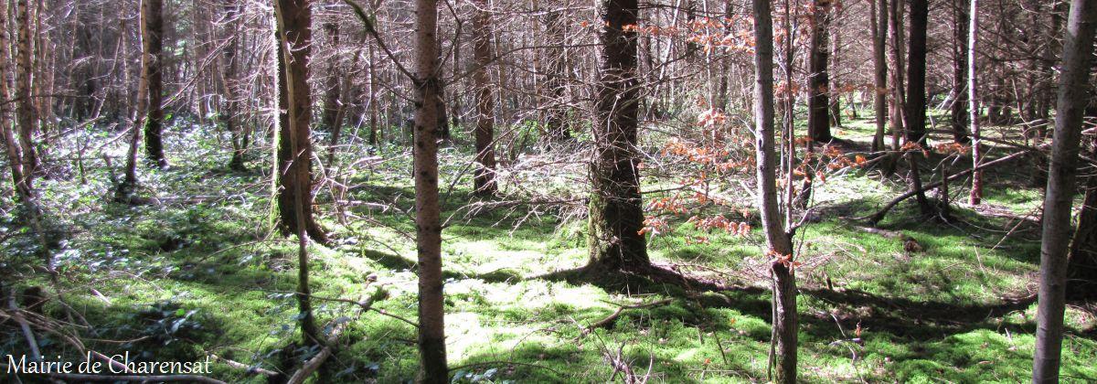 Charensat_Forêt